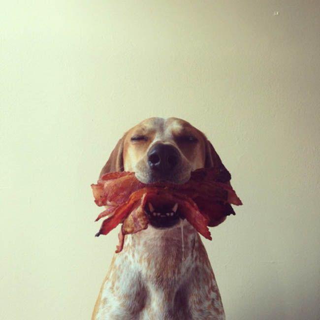 IT'S B A C O N ....... Maddie a Coonhound : Galeria de Fotos « Chongas – Um Blog sem Credibilidade (mentira!)