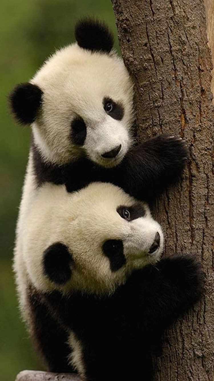 This tree is mine! Cute Panda. Tap to see 9 Cute Animals ...
