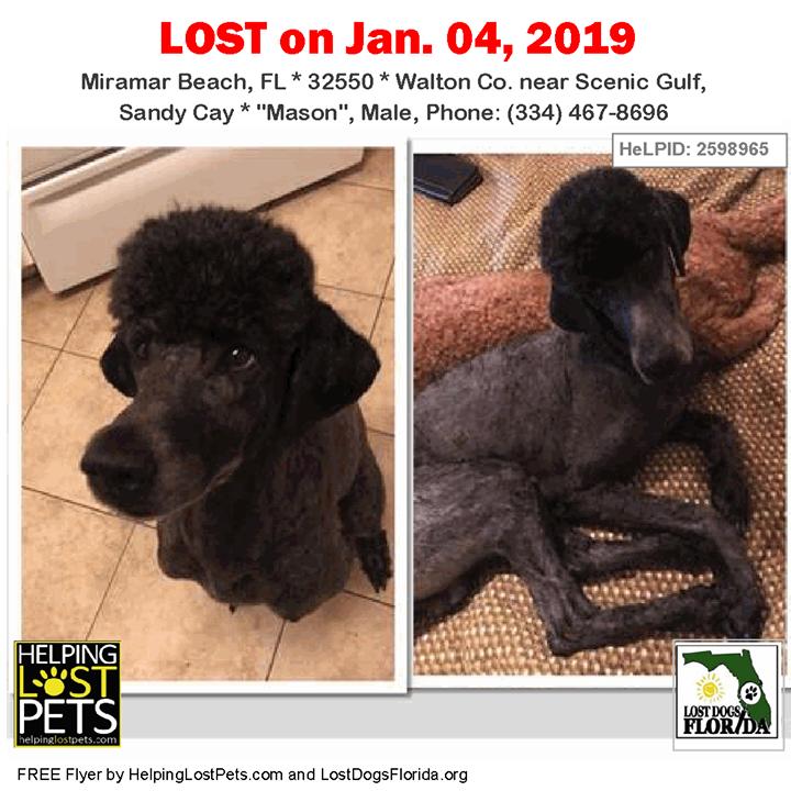 Have you seen this lost dog? LOSTDOG Mason MiramarBeach