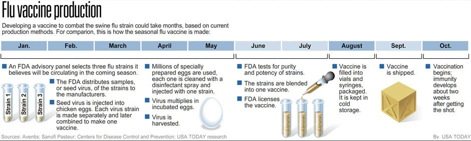 Flu Vaccine Production Timelines  Infographics