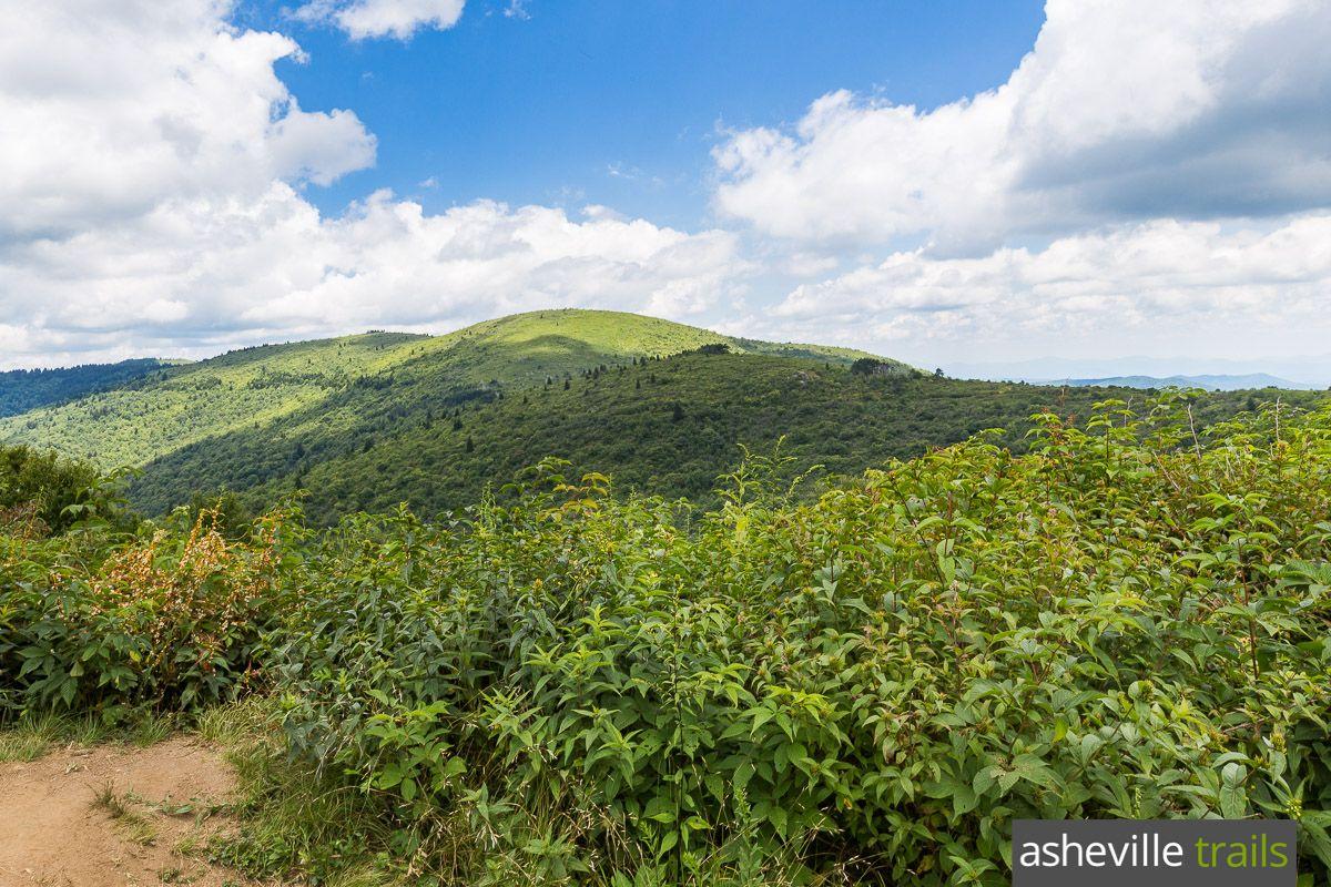 Blue ridge parkway our favorite hikes near asheville nc