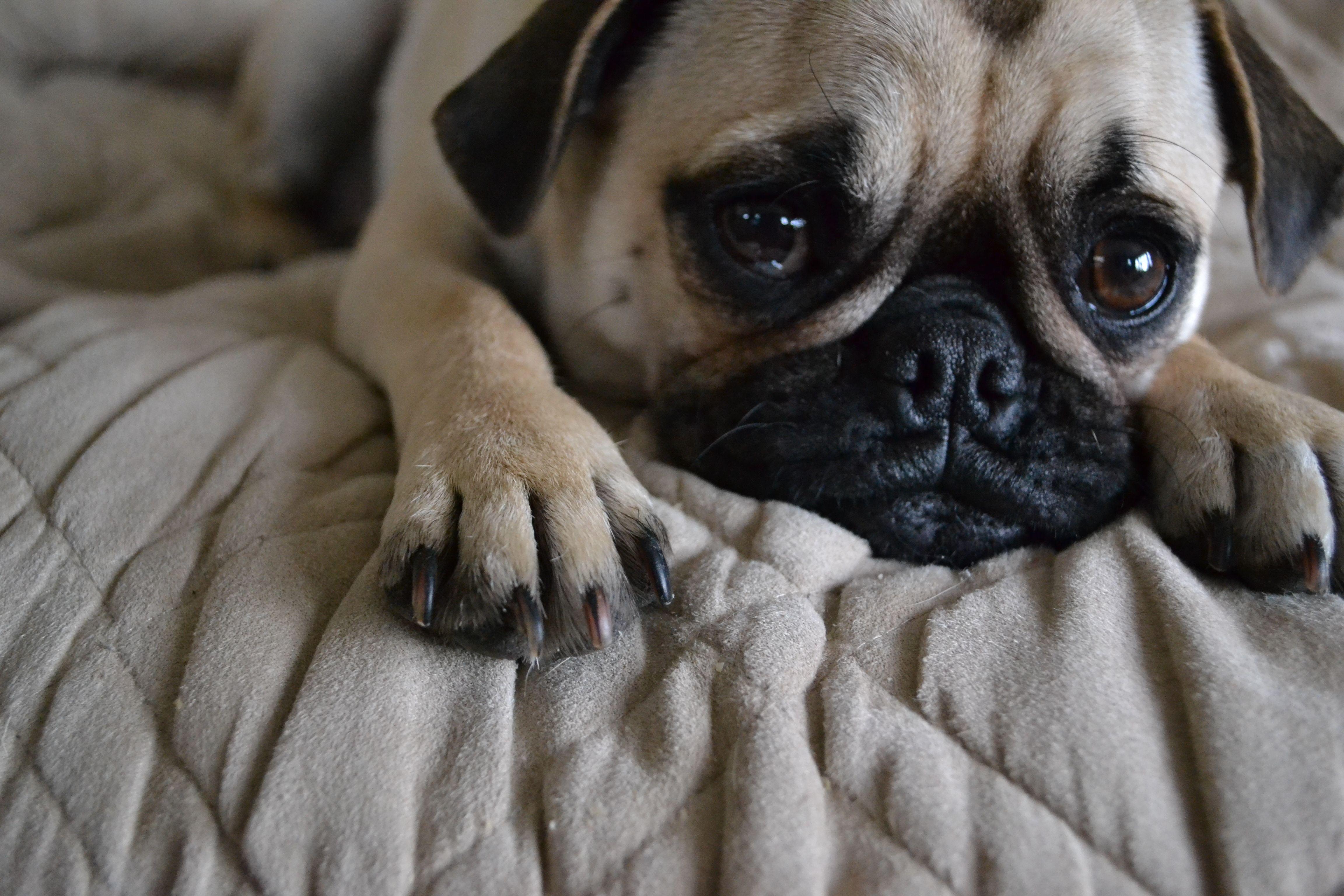 Pin On Dogs Love Hugs
