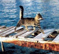 Мурлыки | Смешные кошки, Смешные фото кошек, Смешные животные