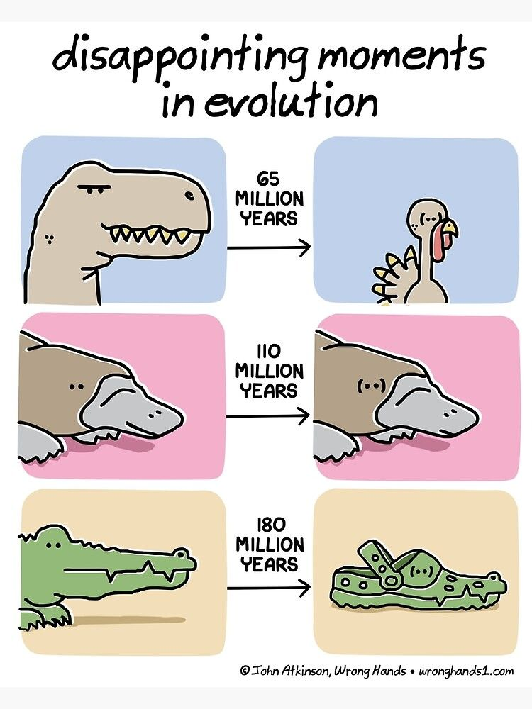 Disappointing Moments In Evolution Poster by Wrong