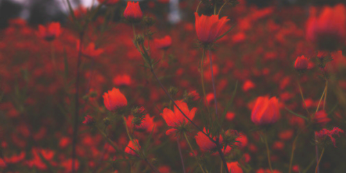 Pin By Esraa Elnabgha On Flowers Selena Gomez Facebook Cover Red Aesthetic Facebook is showing information to help you better understand the purpose of a page. red aesthetic