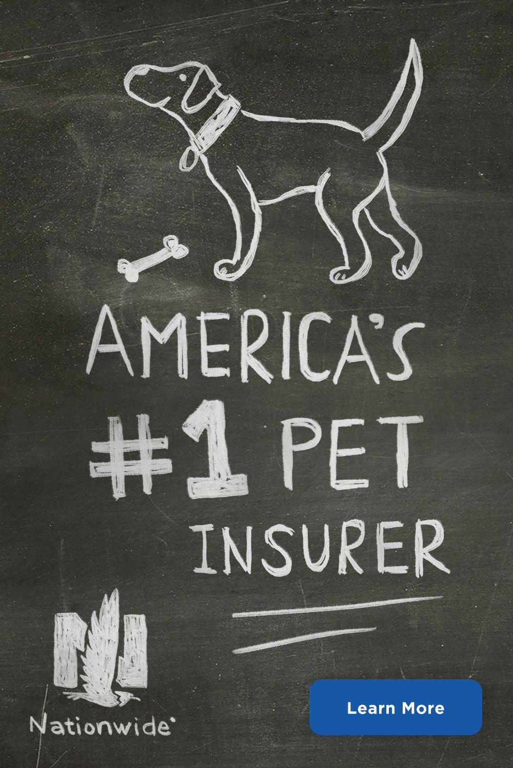 Pet Owners More Like Pet Parents Protect Your Pet With America S 1 Pet Insurance Cat Illnesses Pet Parent Pets