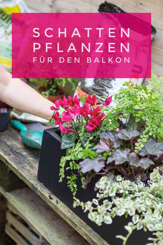 Schattenpflanzen Fur Balkonkasten Farbe Und Struktur Auch Ohne Bluten Schattenpflanzen Pflanzen Schatten Pflanzen