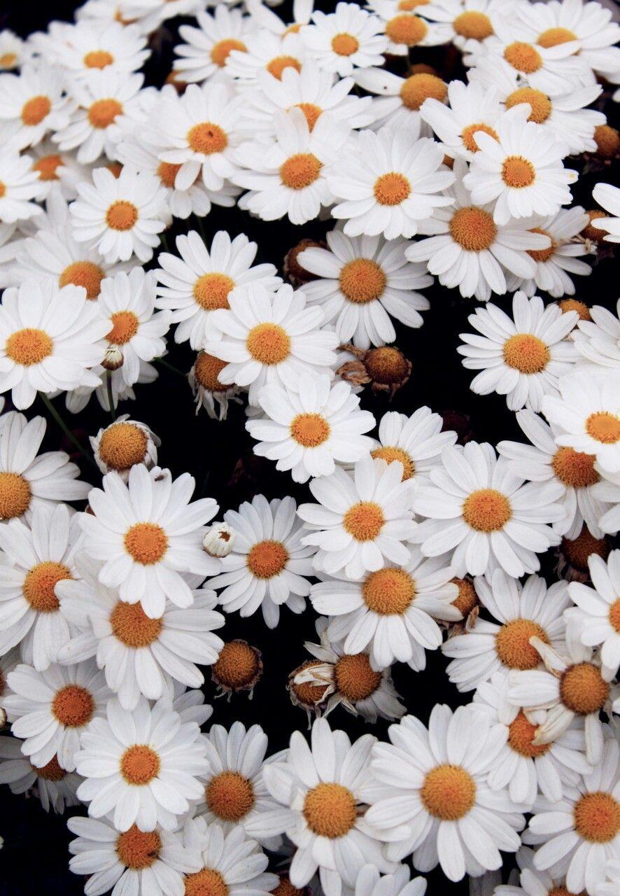 Pin By Glin On Duvar Katlar Pinterest Flowers Wallpaper