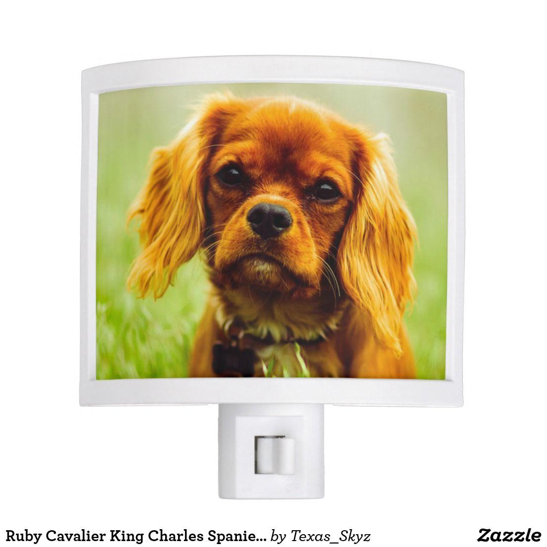 Ruby Cavalier King Charles Spaniel Puppy Dog Night Light Zazzle Com Ruby Cavalier King Charles Spaniel Puppy King Charles Cavalier Spaniel Puppy Cavalier King Charles Spaniel