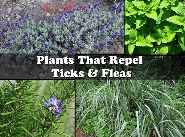 How To Get Fleas And Ticks Out Of Your Yard