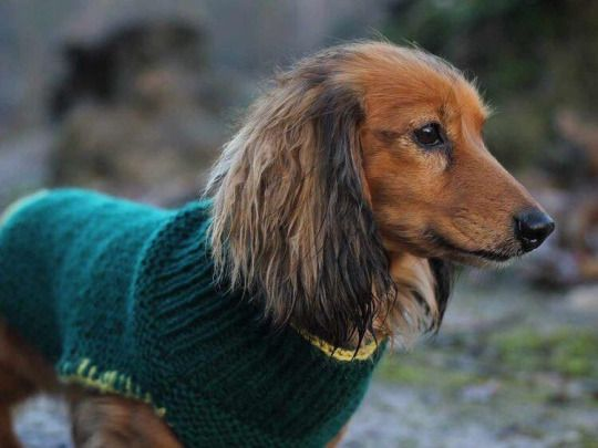 Pin von Beate auf Hundemäntel | Pinterest | Stricken, Hunde und Nähen