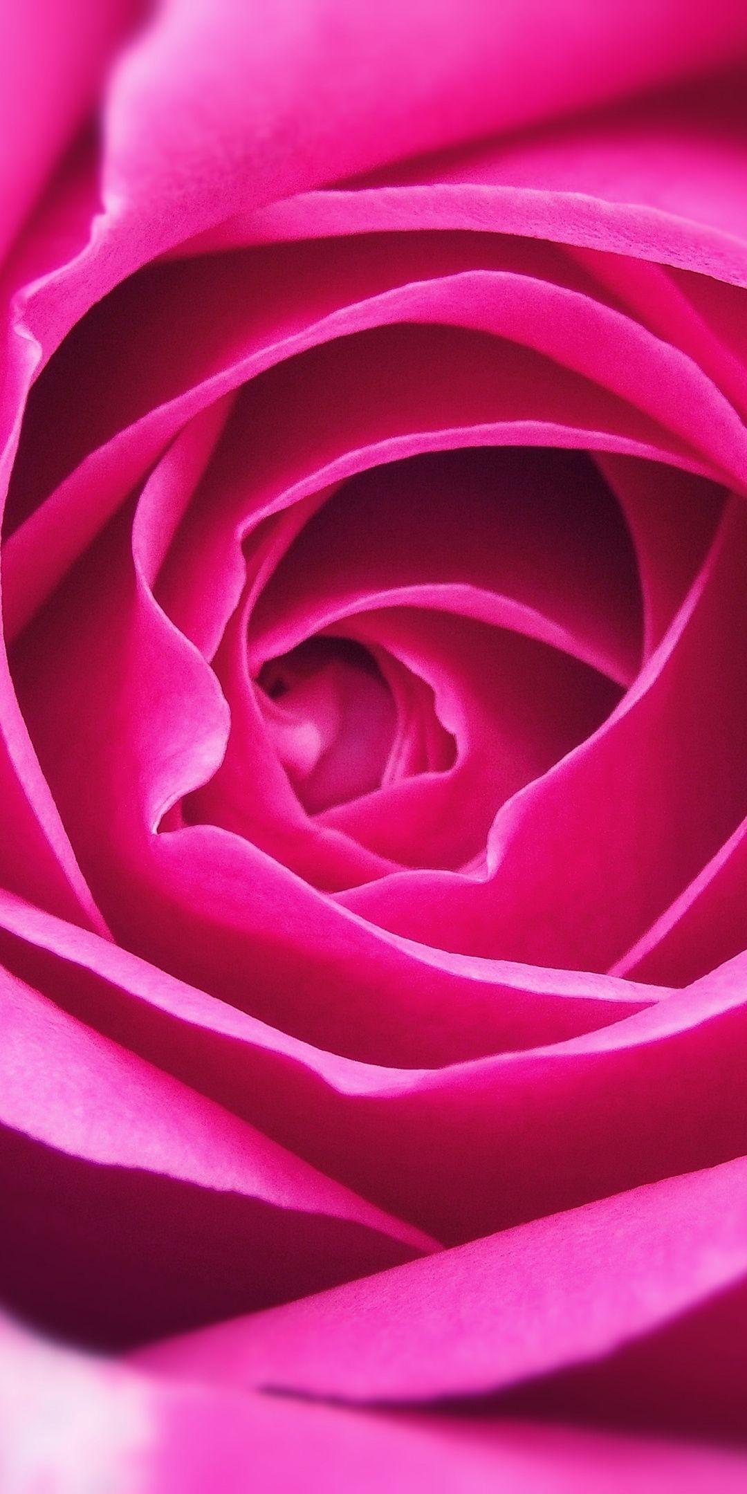 Close Up Petal Pink Rose 1080x2160 Wallpaper Rose Flower Wallpaper Beautiful Rose Flowers Rose Wallpaper Wallpaper rose flower close up petals