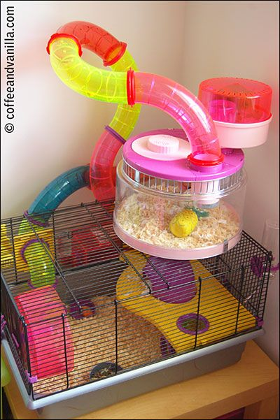 toffy the hamster his kingdom house hamster cages and. Black Bedroom Furniture Sets. Home Design Ideas
