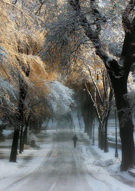 Winter Lane ~ Golden Sunlight