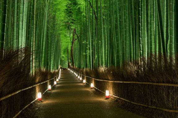 bosque-de-Sagano-Arashiyama-Kioto-en-Japón