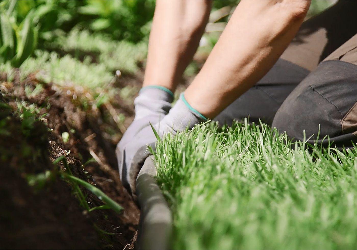 Istutusten sekaan karkaava nurmikko on yleinen ongelma pihoilla. Jos istutusalue jatkuu metrikaupalla, nurmikko kannattaa rajata reunanauhalla. Katso videolta Viherpihan asiantuntijan Lotta Lindholmin ohjeet.