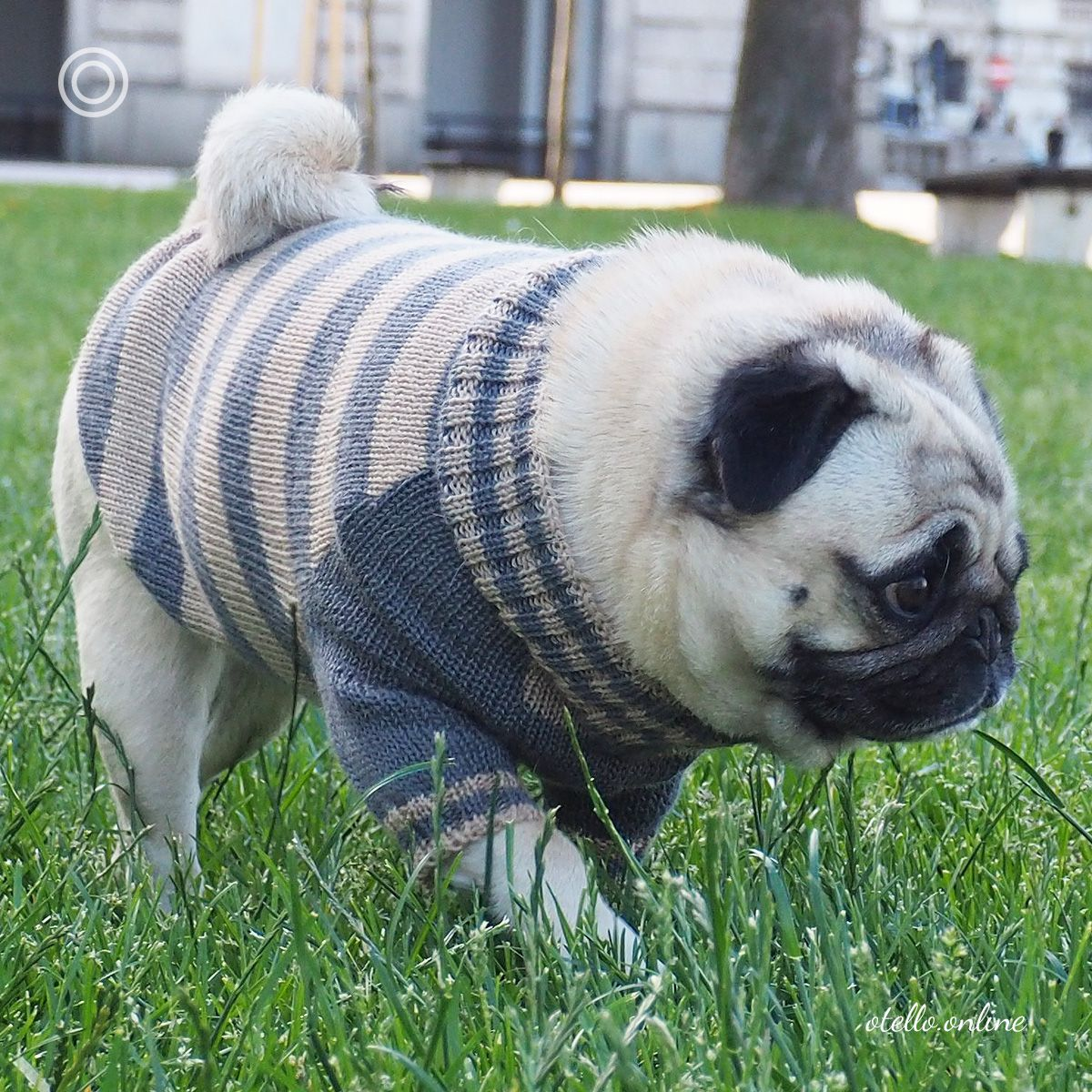 Otello The Pug Sweater Handmade Quality For The Small Breed Dog