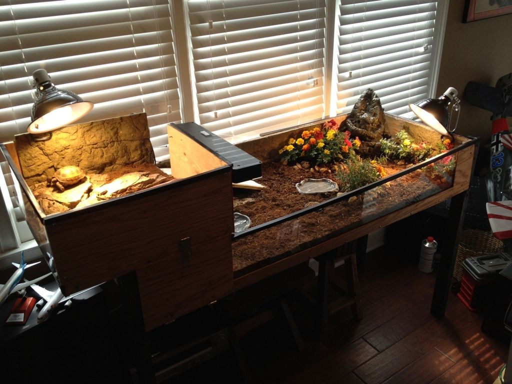 Pin by patrick mccarron on pets pinterest tortoise table