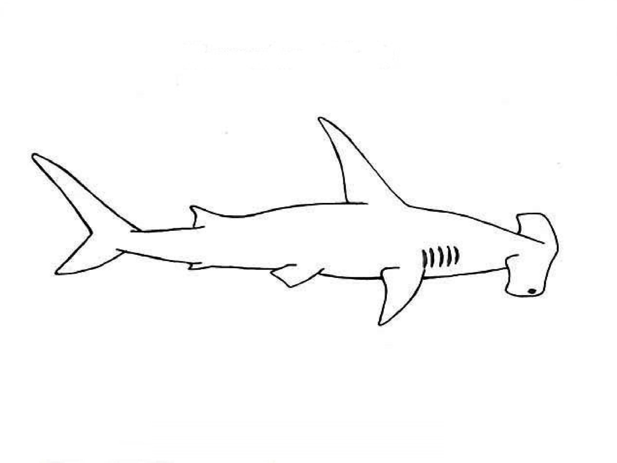 How to Draw a Hammerhead shark / Как нарисовать Акулу-молот ...