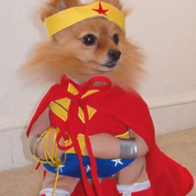 I Love Dressed Up Dogs So Cute Pet Halloween Costumes Dog Halloween Costumes Dog Halloween
