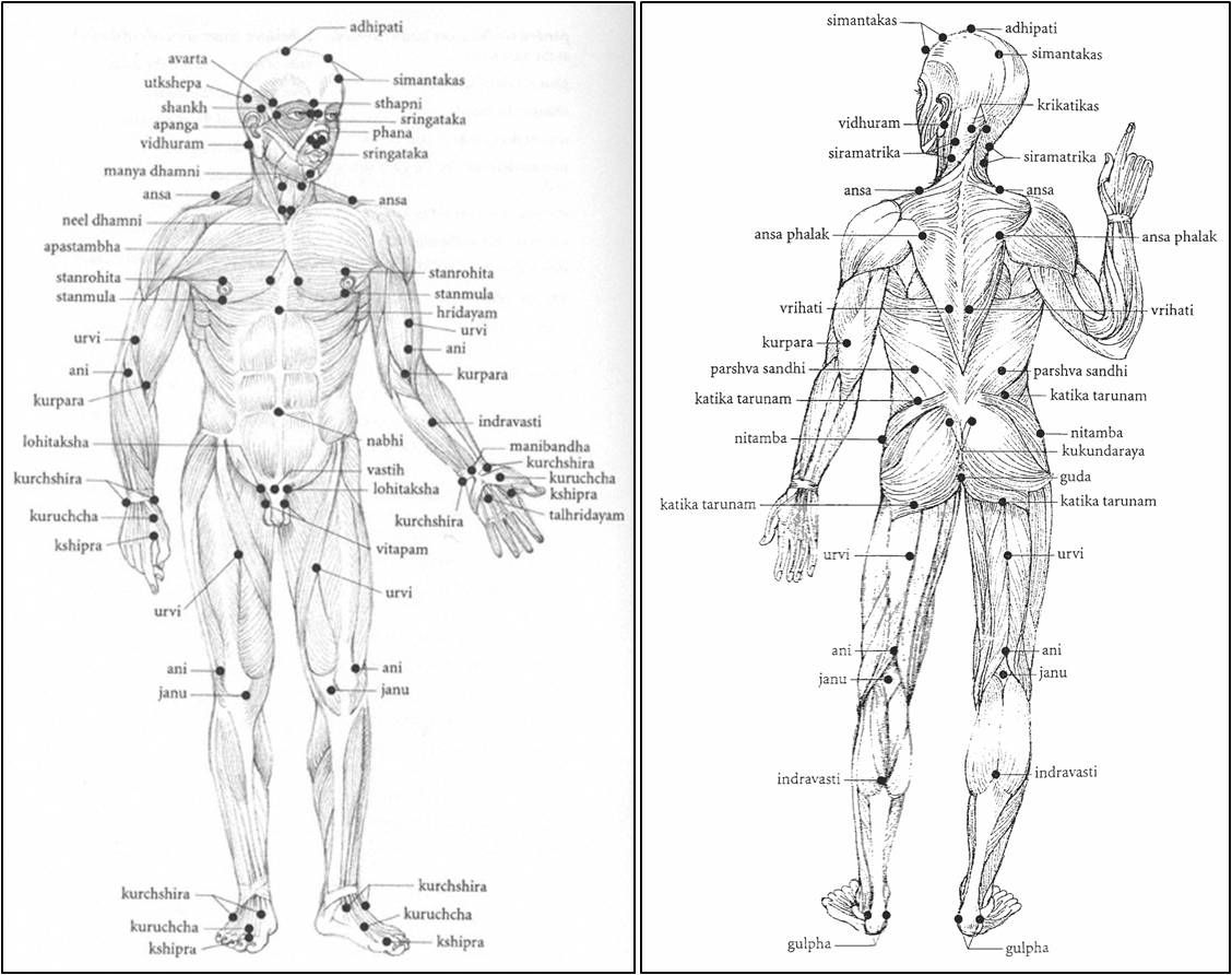 Pressure Points Human Body Diagram Marma Points