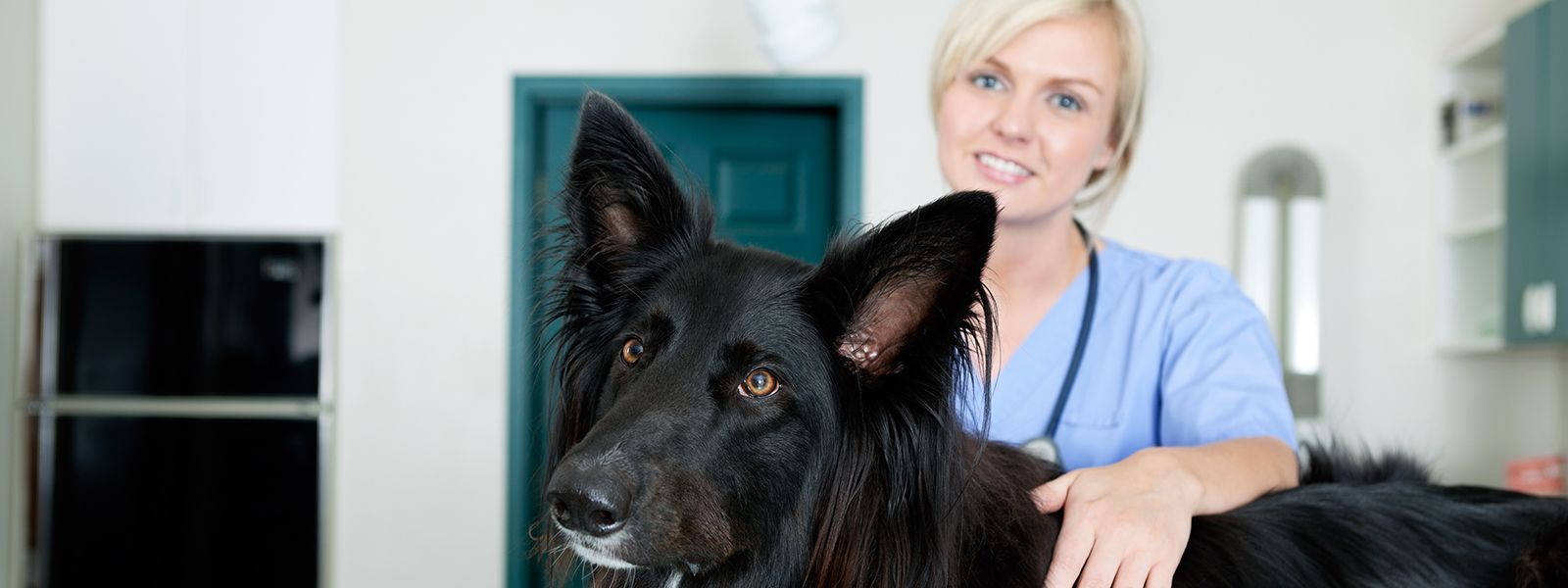 The Veterinary Technician's Role in Implementing Fear Free