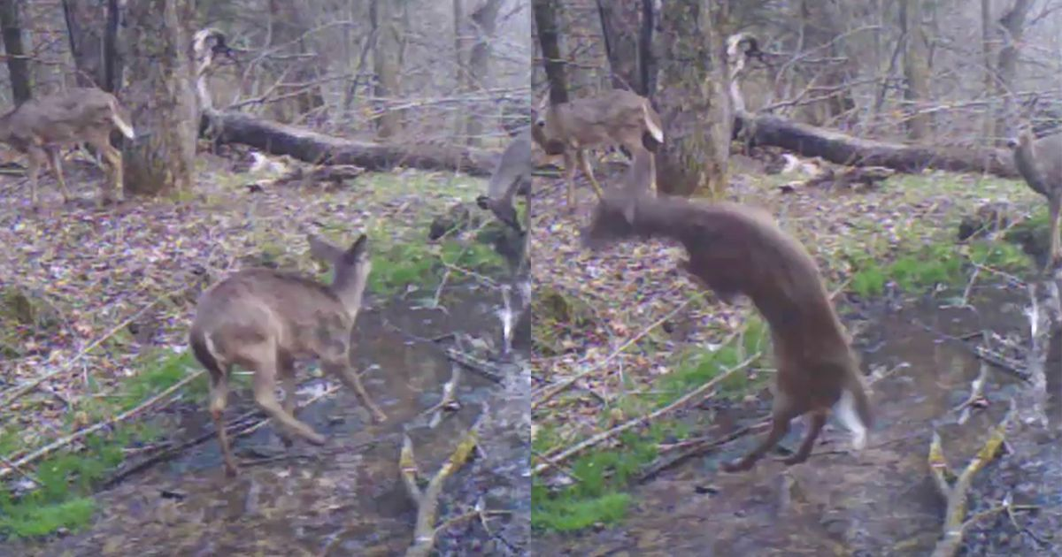 #gaming #videos  #fun #deals  Trail cam…  |Subscribe to see entertaining videos! bit.ly/2n9c2sc @DNR_CREW @HyperRTs | eBargainsToday.com