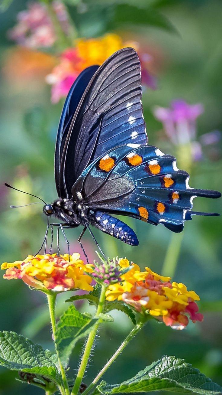Blue Butterfly in 2020   Cute butterfly, Butterfly ...