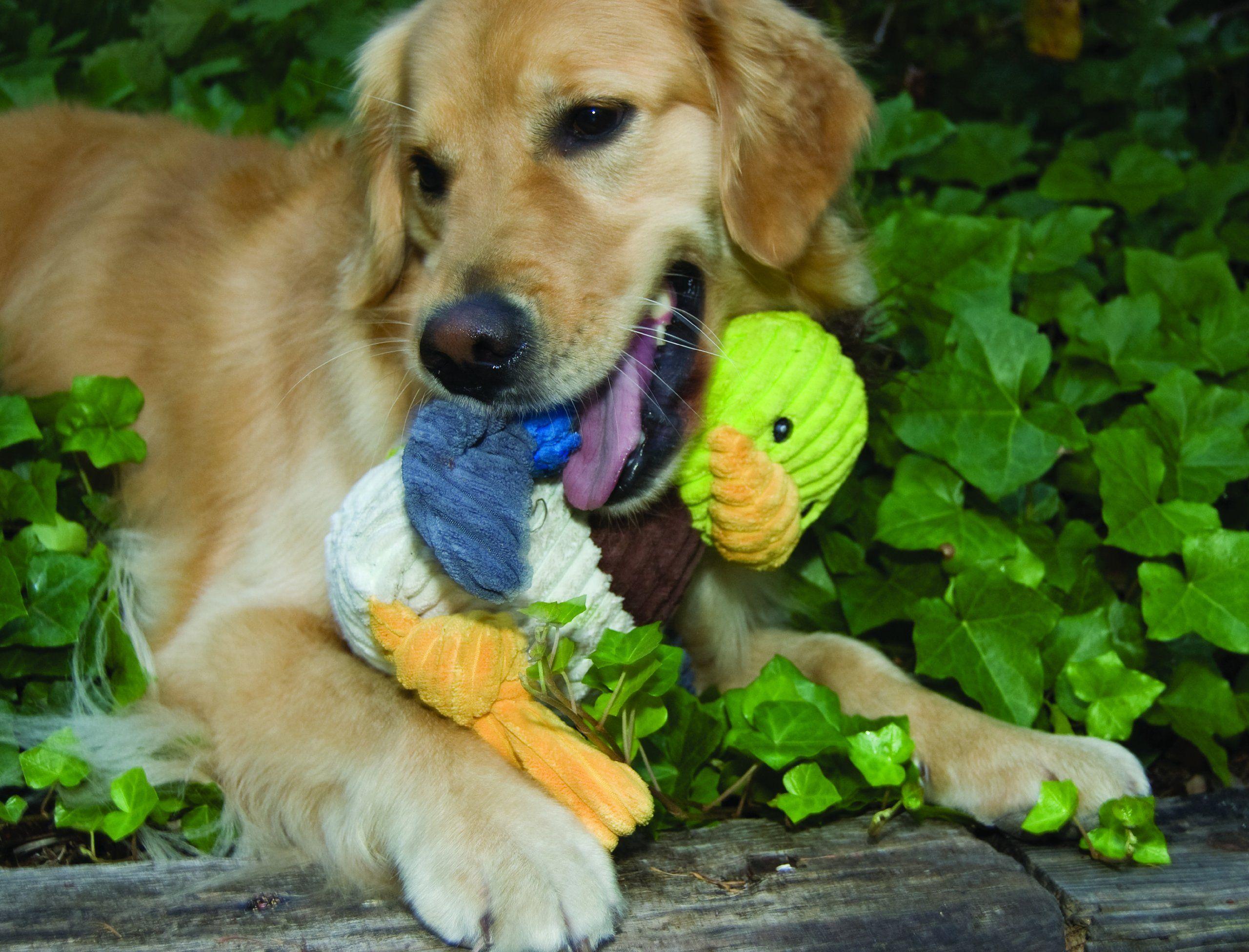 Hugglehounds Plush Corduroy Durable Knotties Duck Dog Toy Large