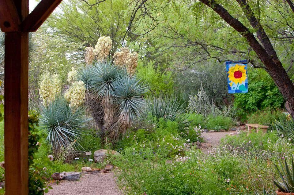 Tucson Botanical Gardens Tucson Arizona My Home