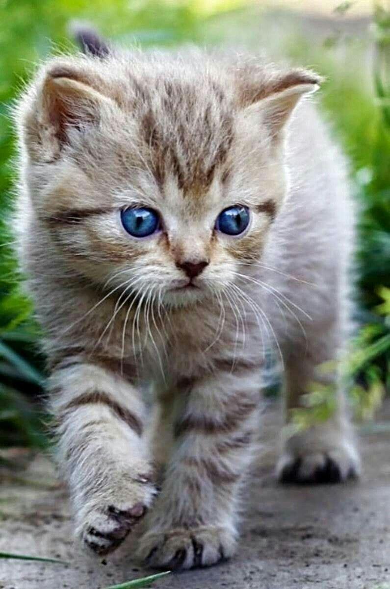 Pin Von Maria Anna Auf Katzen Bilder Katzen Wilde Katzen Bezaubernde Katzchen