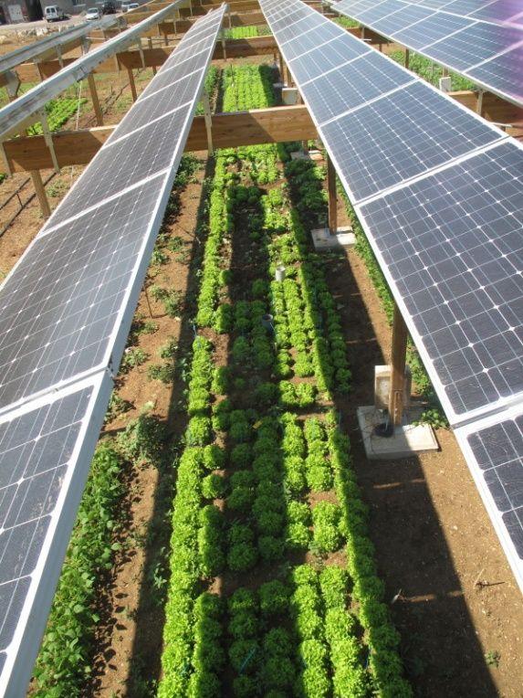 Agrivoltism Resilience Solar Solar Farm Solar Panels
