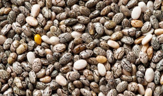 Veja os benefícios da chia, linhaça, centeio, trigo em grãos, entre outros