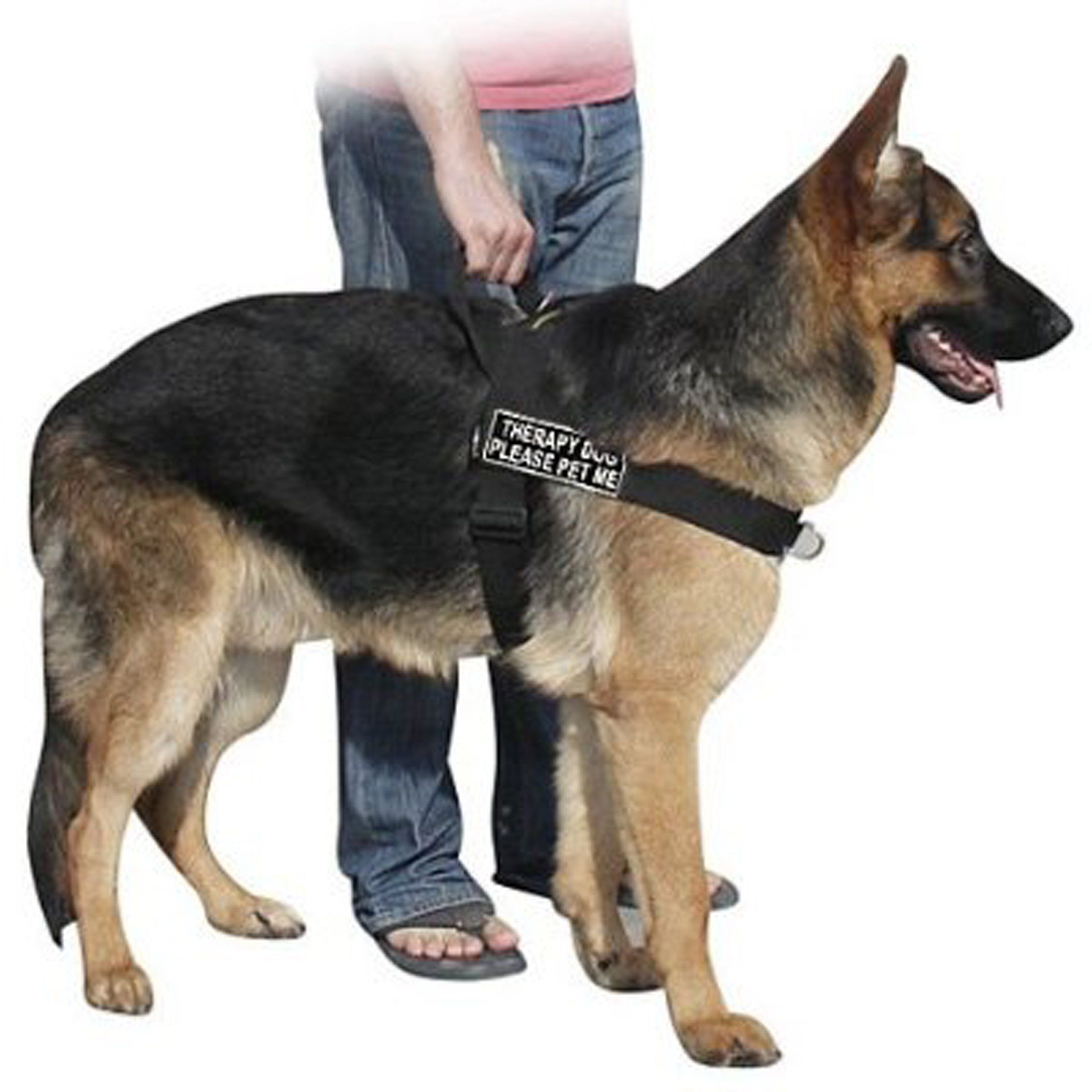 Dt Universal No Pull Dog Harness Therapy Dog Please Pet Me Black
