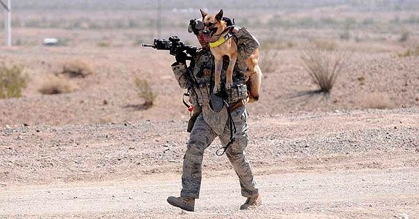 soldier dogs goodavage maria