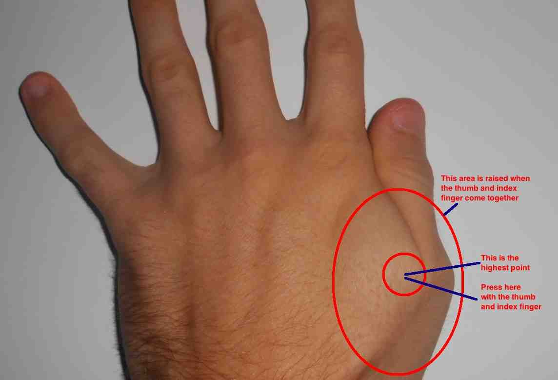 Find the most raised point. | Sinus pressure points, Hand ...