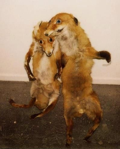 29 Hilarous Taxidermy Fails Terrific And Terrible Taxidermy