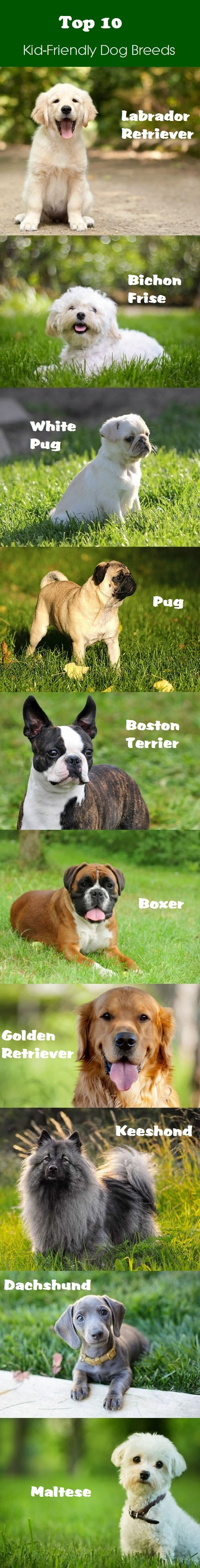 What Kind Of Dog Should We Get The Best Dogs For Kids Dog Breeds Child Friendly Dogs Best Dog Breeds