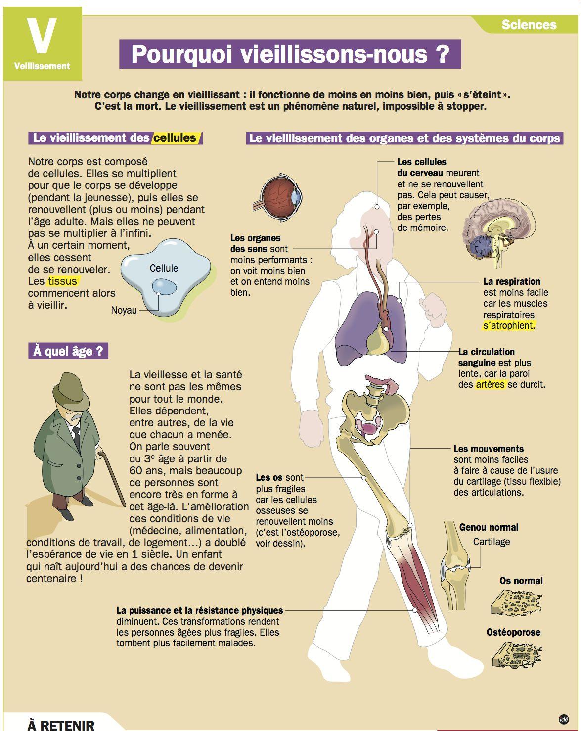 vieillissement du corps humain