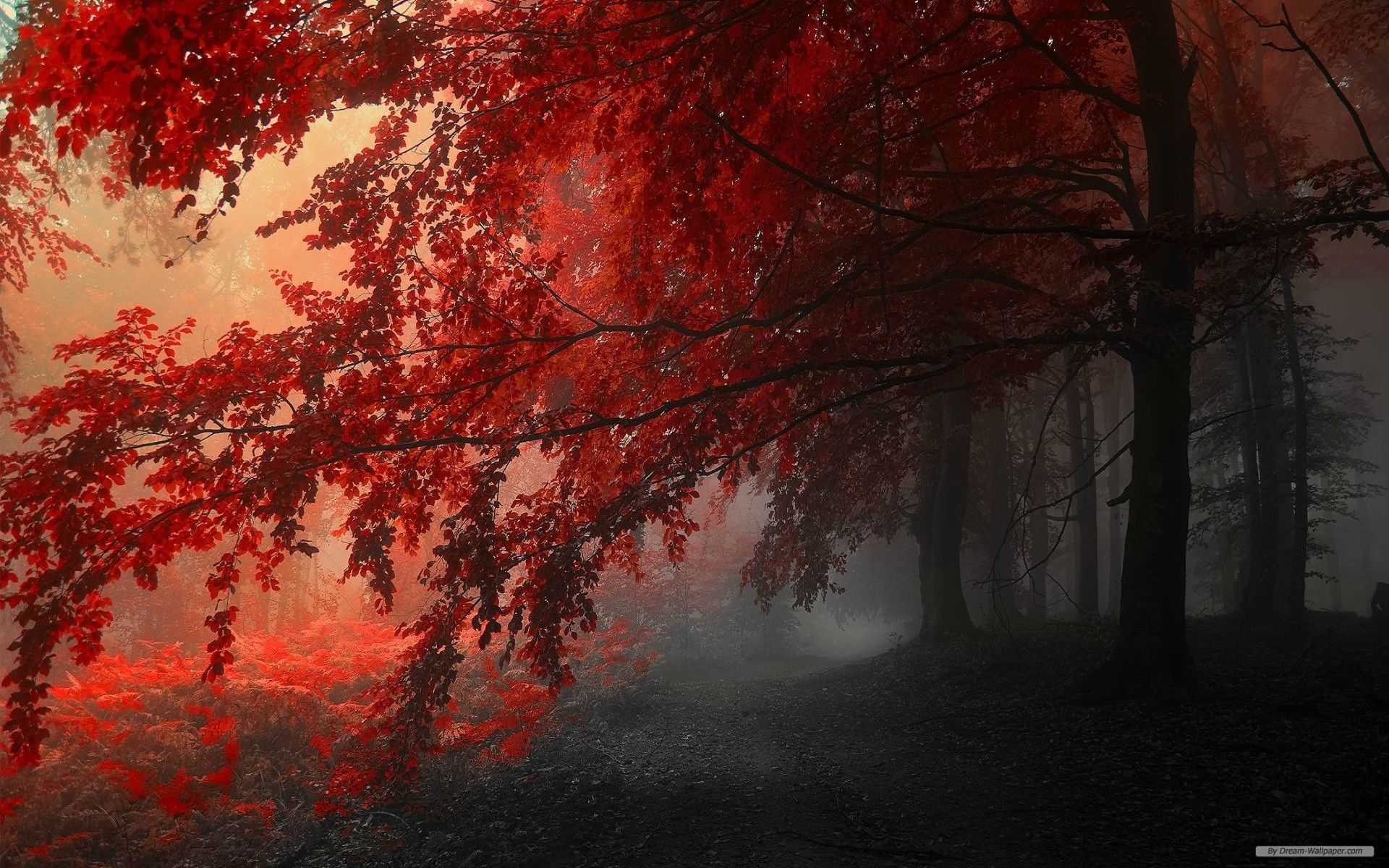 Free Nature Wallpaper Autumn Red Leaves Forest Trees Wallpaper 1920x1200 Wallpaper Index 5 Tree Hd Wallpaper Forest Wallpaper Landscape