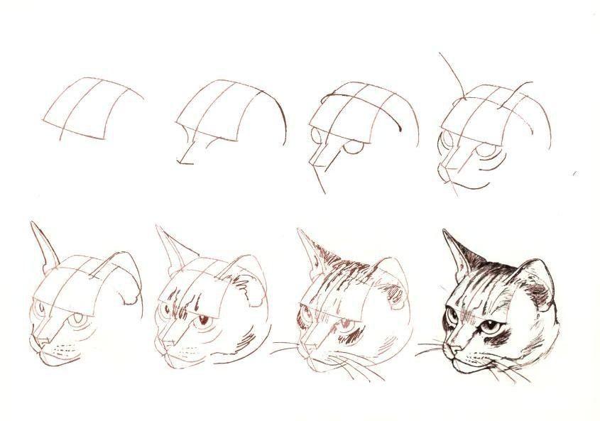 Como dibujar la cara de un gato paso a paso | Aprendo a dibujar ...