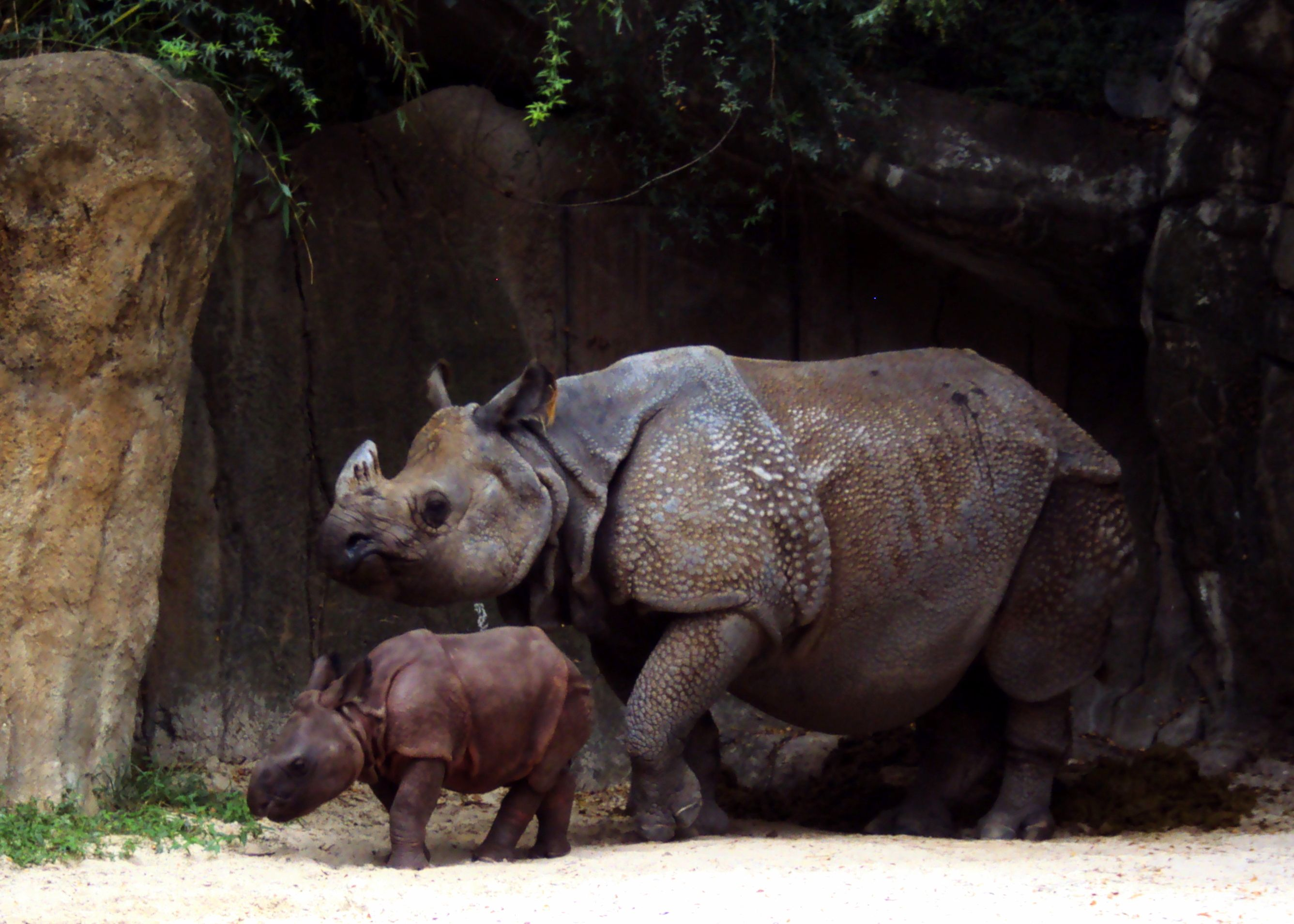 Fort Worth Zoo The Best Zoo in Texas Fort worth zoo
