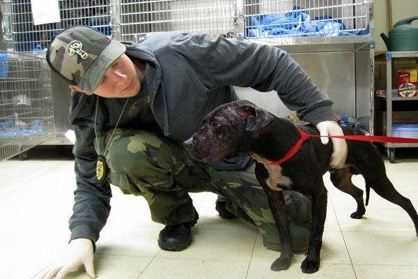 George Bengal of the Pennsylvania SPCA is like the Ed