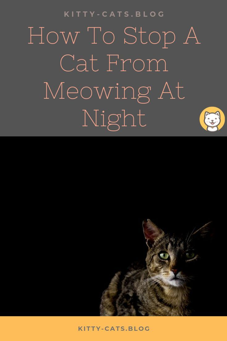 How To Stop A Cat From Meowing At Night Cat meowing at