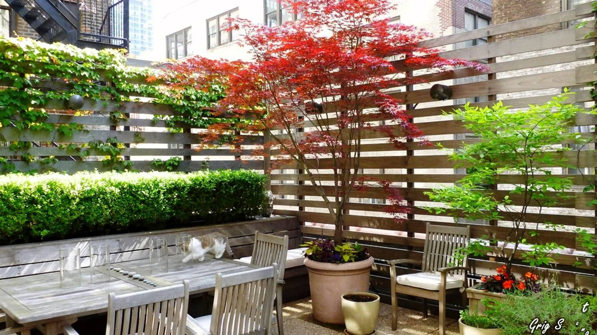 Climbing Plants on Balconies, Patios and Decks – Screening and ...