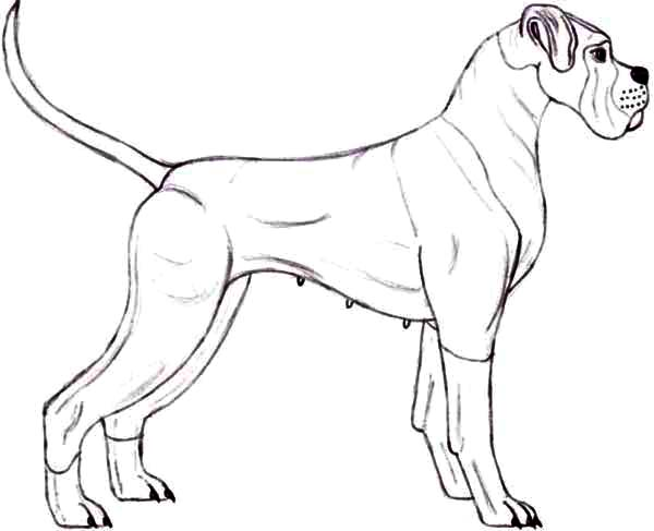 Police Boxer Dog Coloring Pages Best Place To Color Dog Coloring Page Boxer Dogs Coloring Pages