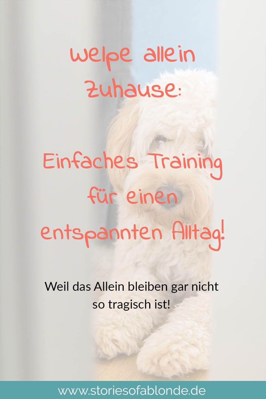 Pin Auf Hunde Welpen Erziehung