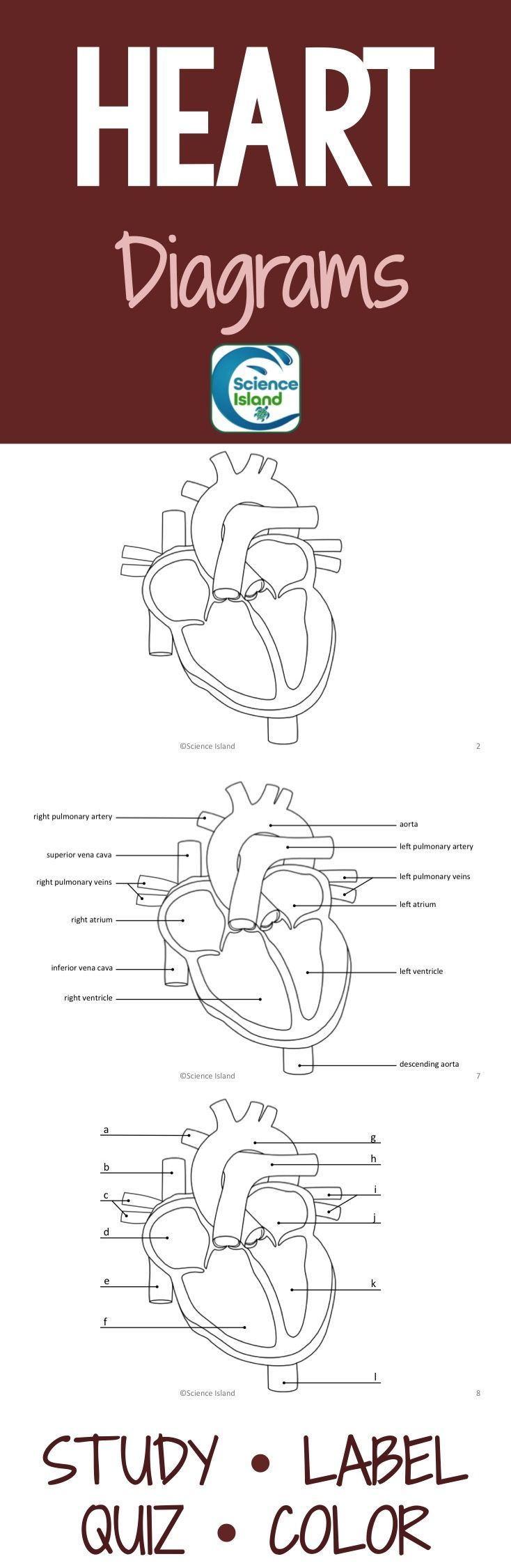 Heart Diagrams and Quizzes (Distance Learning) | Heart ...