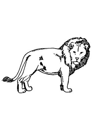 ausmalbild löwe 7 zum kostenlosen ausdrucken und ausmalen