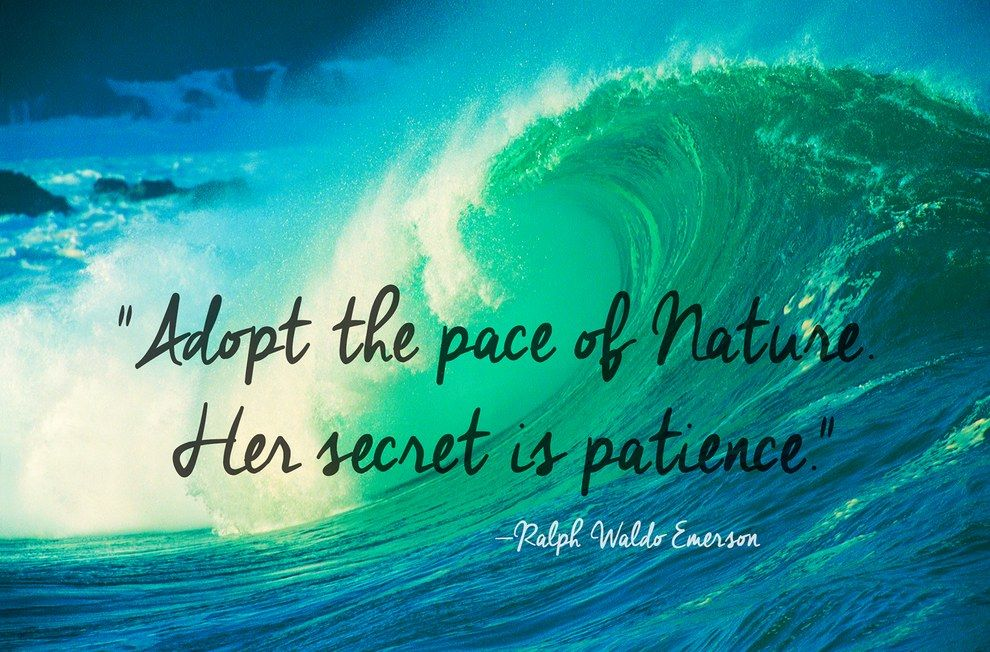 24 Of The Most Beautiful Quotes About Nature Nature Quotes Mother Nature Quotes Caption For Nature